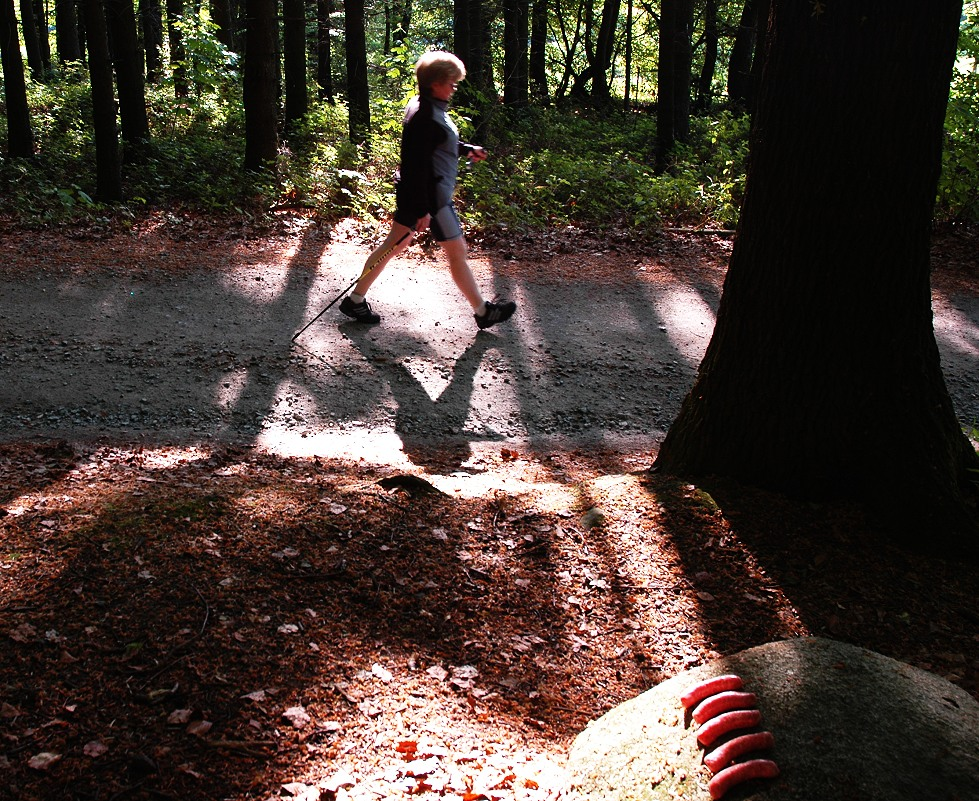 wild wachsende Waldwurst geerntet