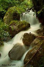 Wild Water III