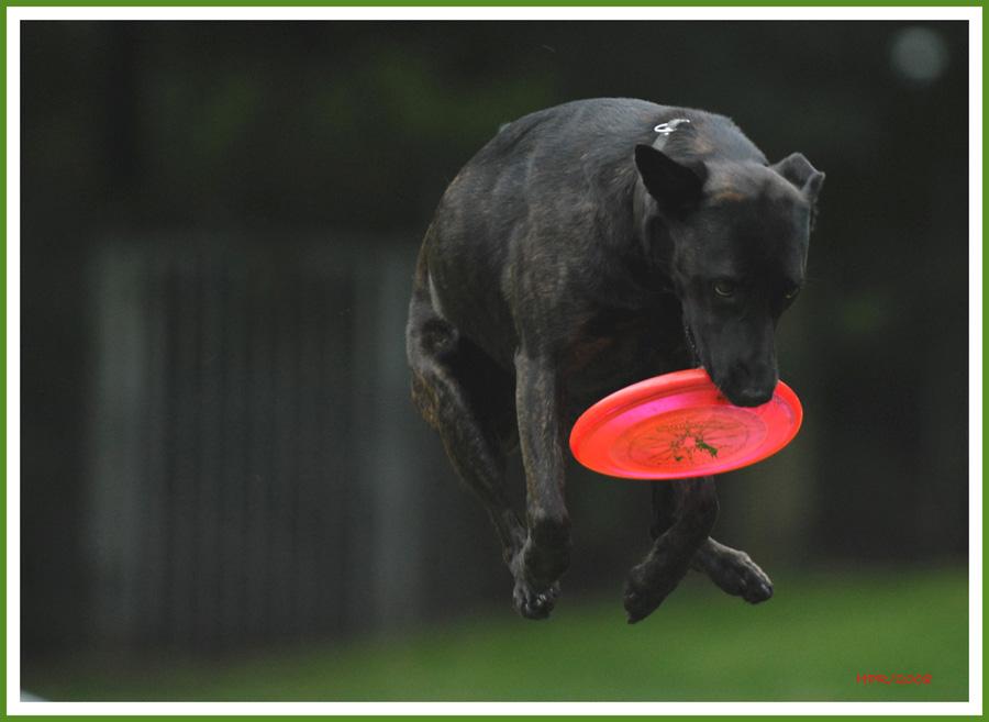 Wild-West Disk Dog