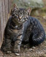 wild wild cat...