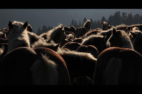 wild wild horses couldn't drag me away