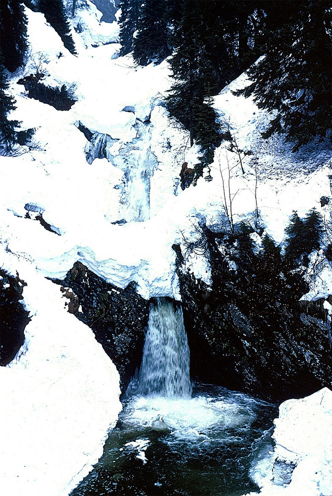 Wild, Wild Snow