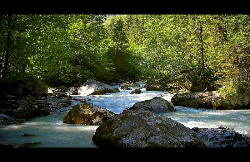 Wildbach im Wald