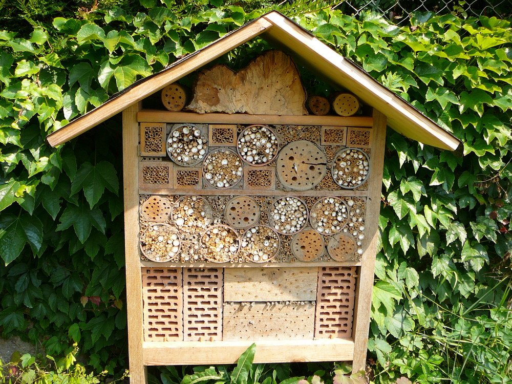 wildbienenhotel foto bild tiere wildlife insekten. Black Bedroom Furniture Sets. Home Design Ideas