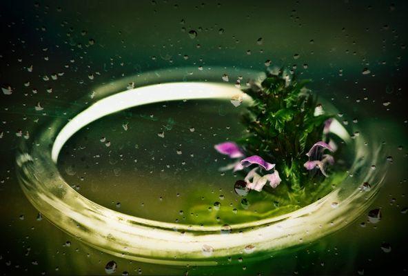 Wildblümchen..