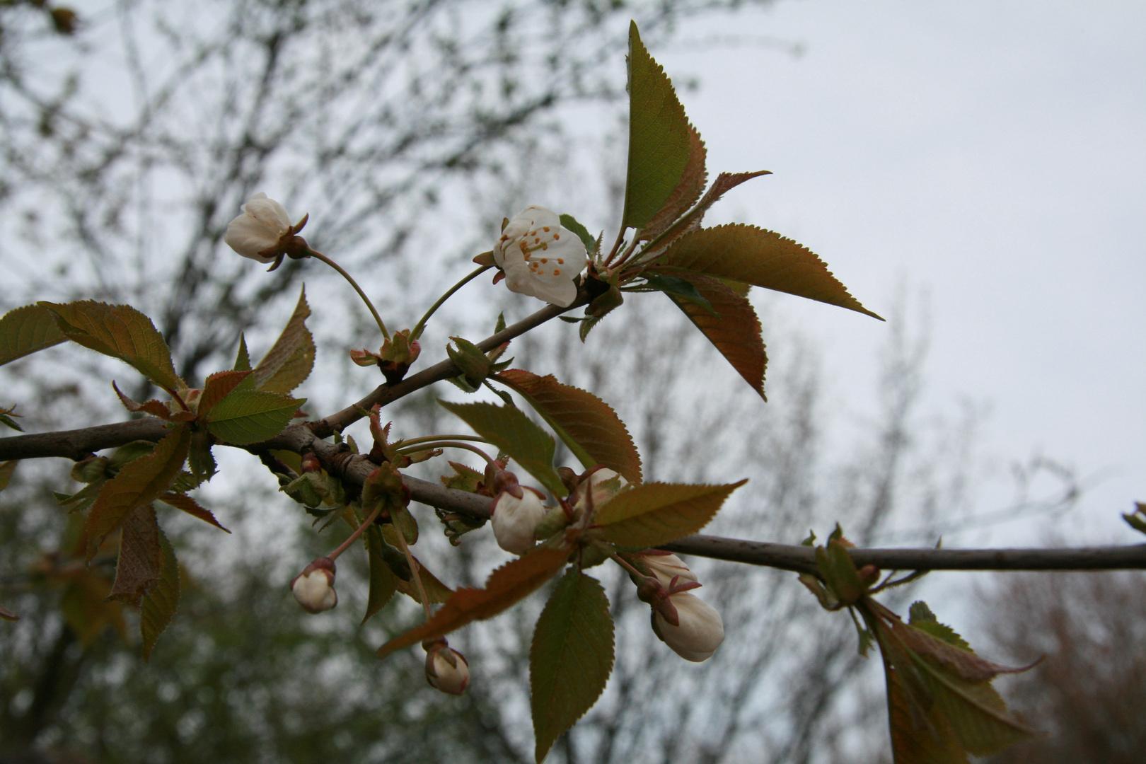 Wildblüten am Wegesrand