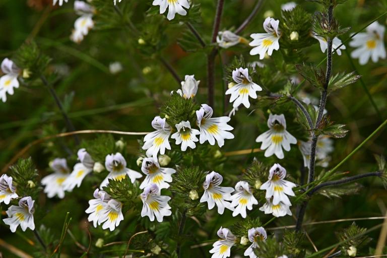 Wildblumen (14)