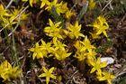 Wildblumen (142)