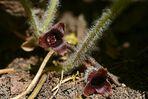 Wildblumen (15)