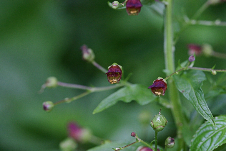 Wildblumen (17)