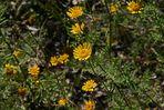 Wildblumen (23)