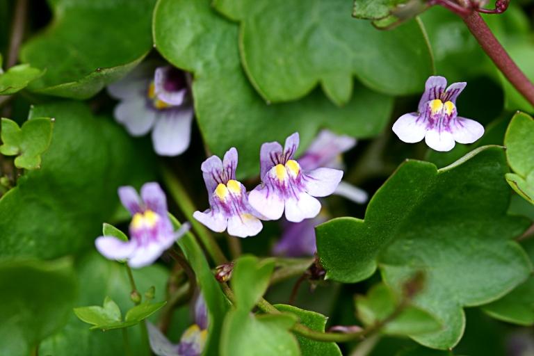 Wildblumen (46)