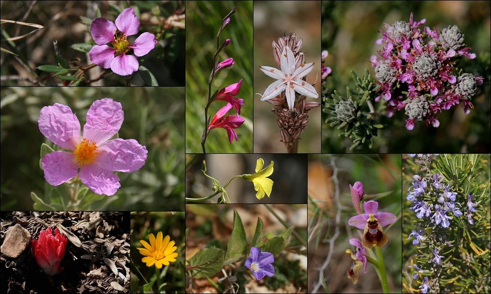Wildblumen-Bilderbogen Mallorca im März!