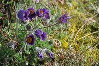 wildblumen-rheinhessen