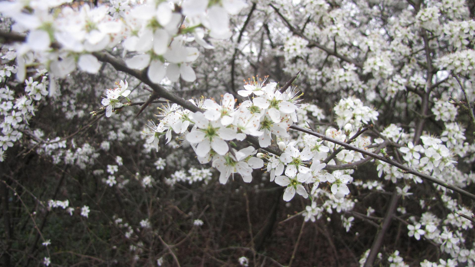 Wildblumensträuche