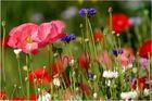 Wildblumenwiese........
