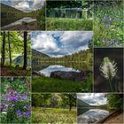 Wildblumenwunderwelt...
