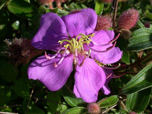 Wilde Blüte im Morgenlicht