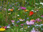 Wilde Blumen I