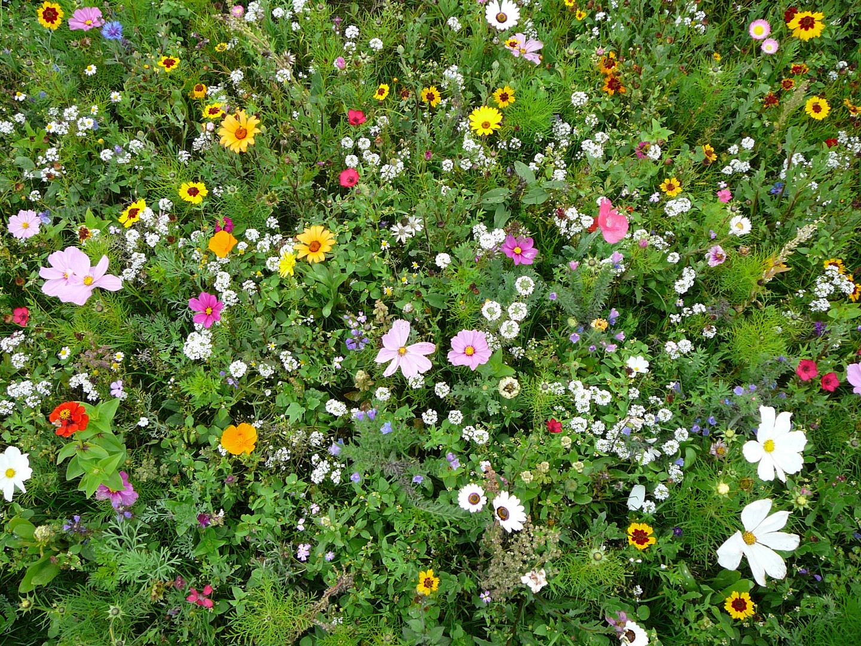Wilde Blumen II