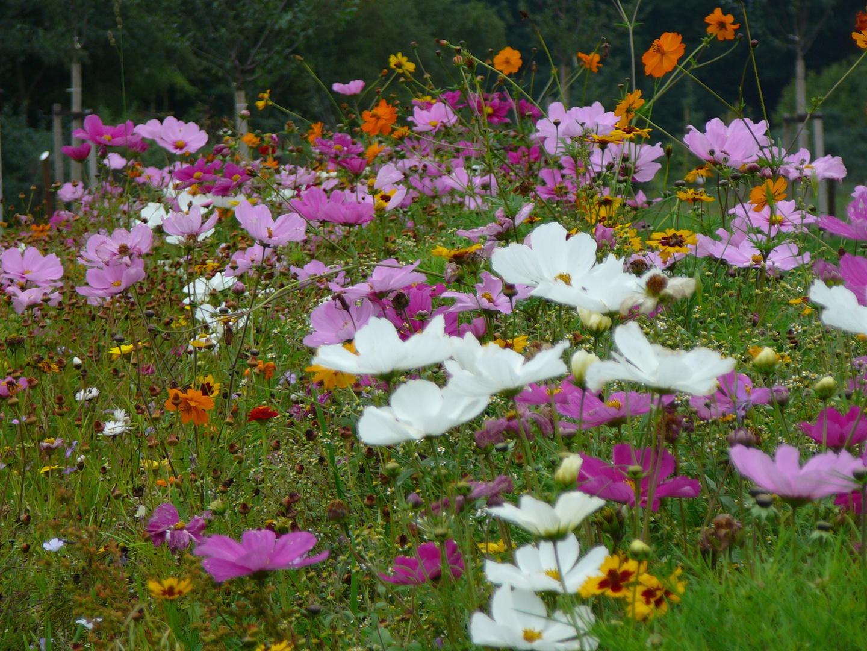 Wilde Blumen IV