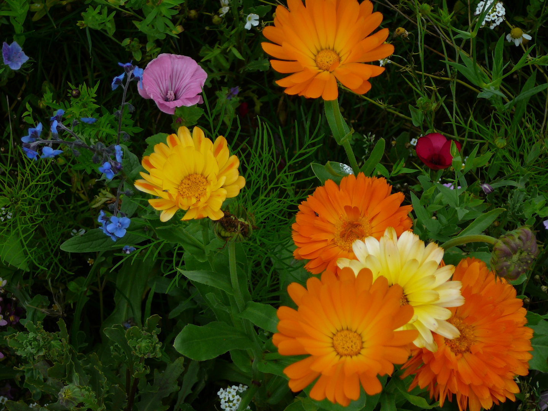 Wilde Blumen V