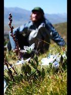 Wilde Blumenpracht auf den Grasshügeln um Litang.