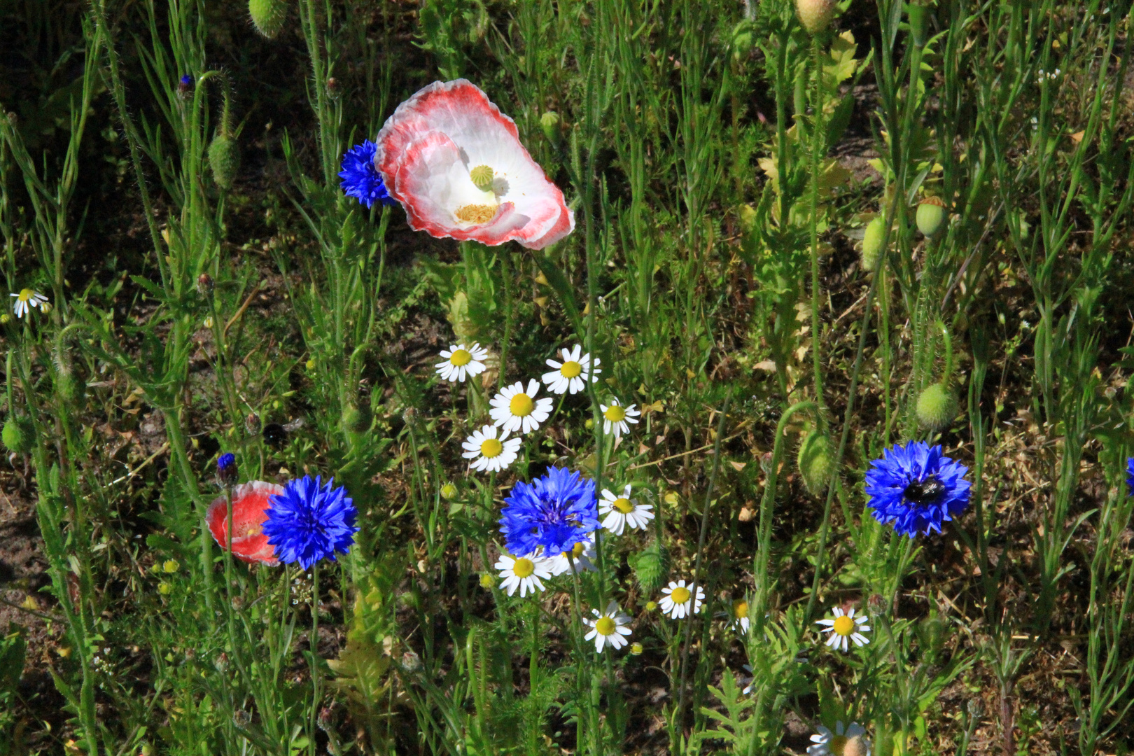 Wilde Blumenwiese