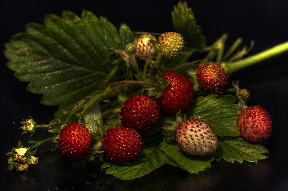 wilde erdbeeren foto bild pflanzen pilze flechten fr chte und beeren pflanzen bilder. Black Bedroom Furniture Sets. Home Design Ideas