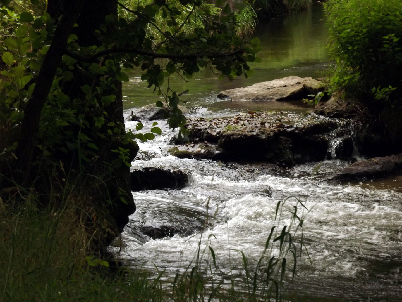 Wilde Fluten