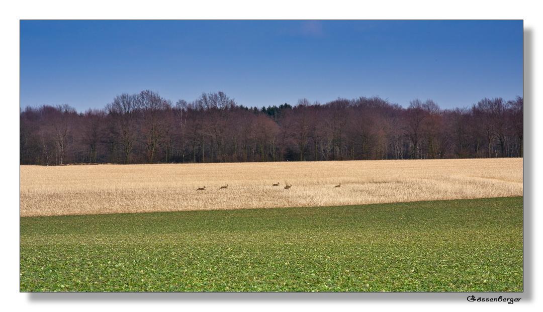 Wilde Hatz durch Feld und Flur
