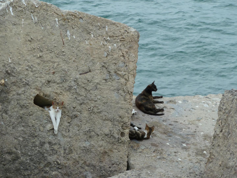 wilde Katzen in Cadiz