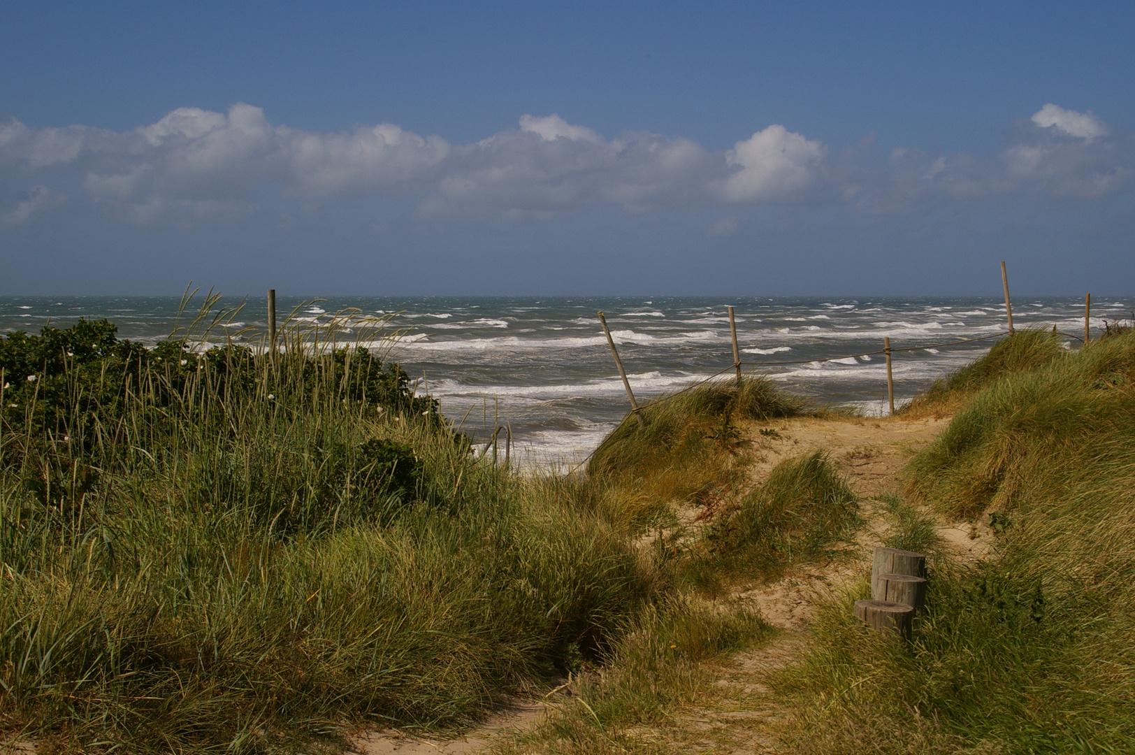 Wilde Küste Dänemark