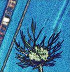 Wilde Möhre in Blau