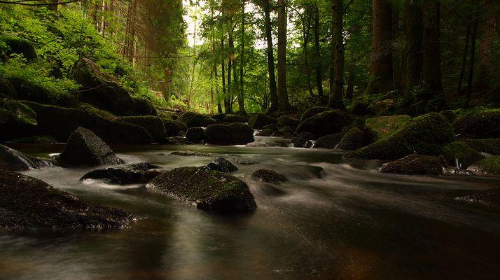 wilde Natur 2, Saußbachklamm