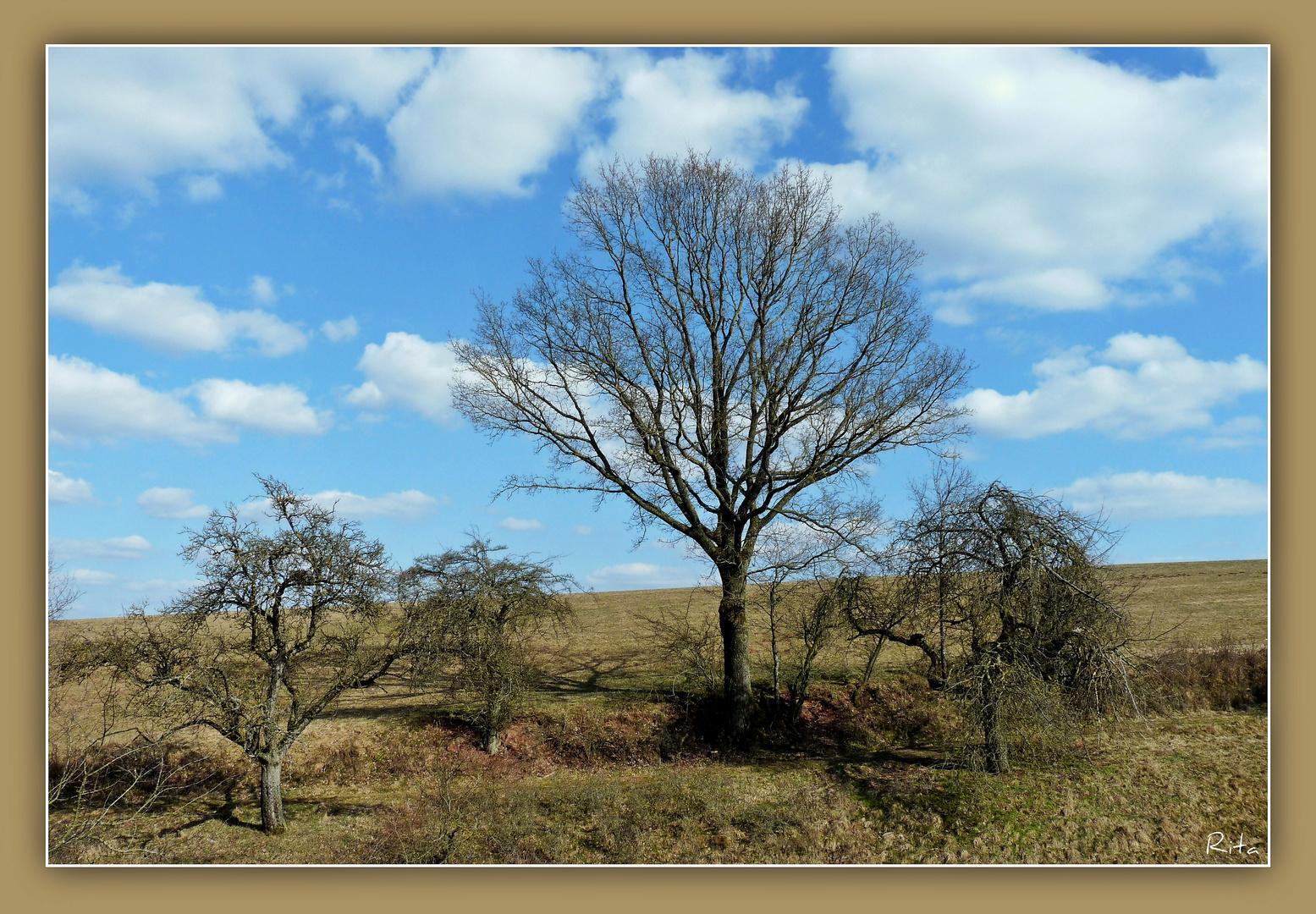 wilde Natur (3)...