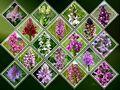 Wilde Orchideen in der Schweiz von Luci 11