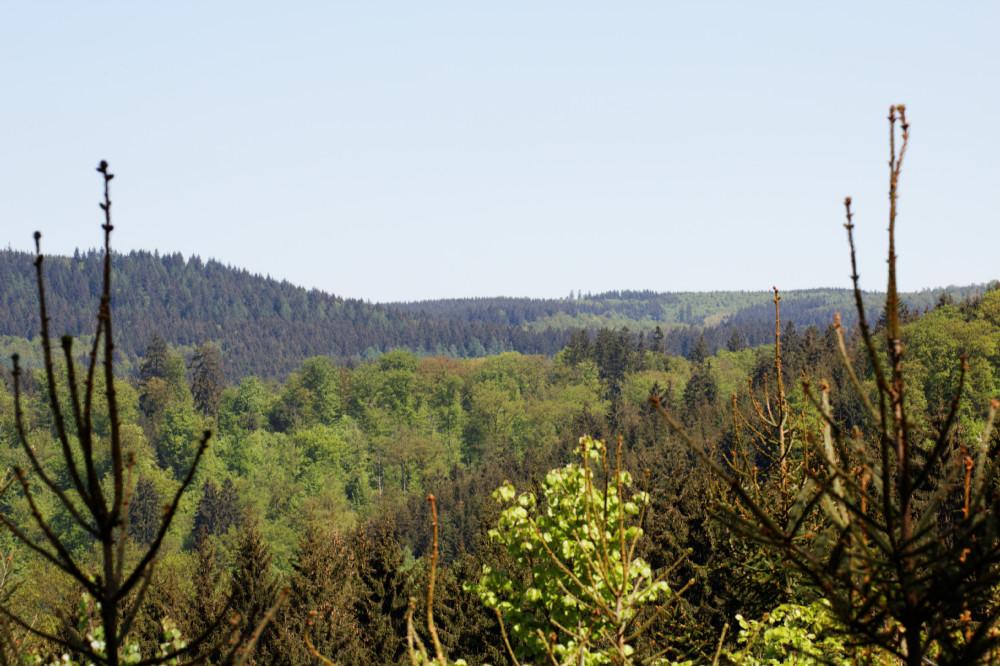 Wildenburger Land im Frühling