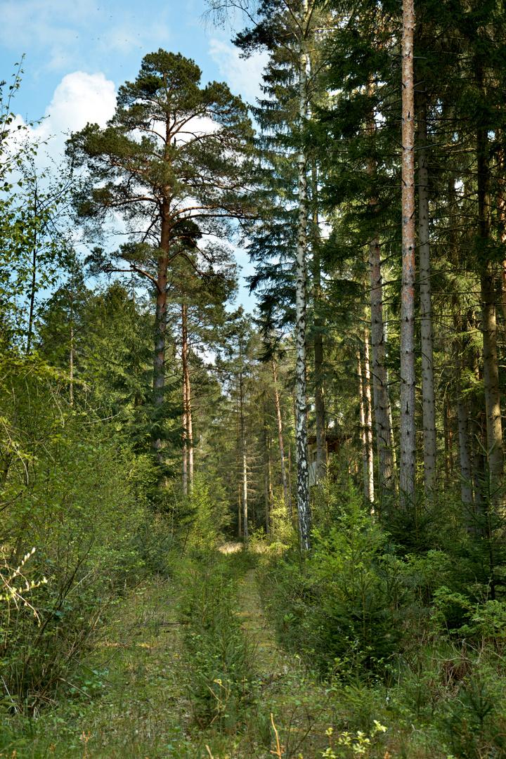Wilder Waldweg