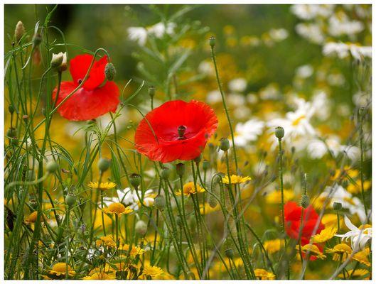 wildes Blühen