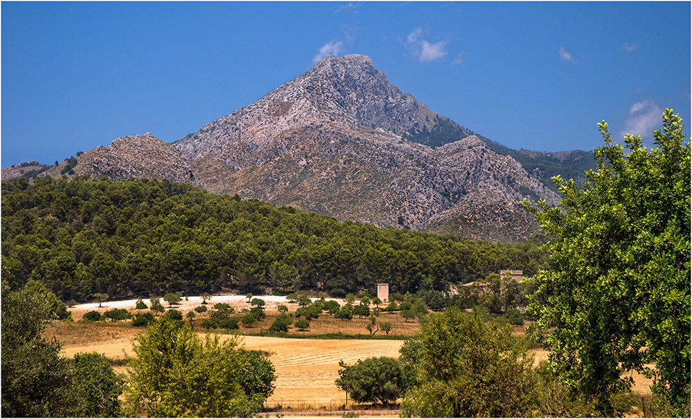 Wildes Mallorca (2)