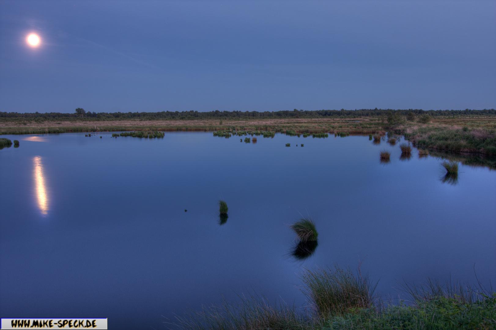 Wildes Moor bei Rendsburg