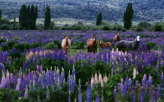 Wildes Patagonien 3