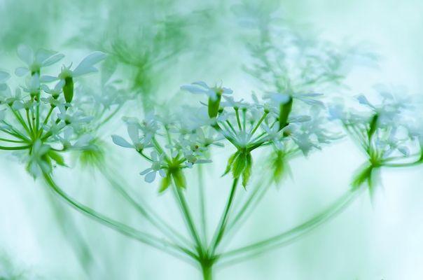 Wildes Sommerwiesenblümchen