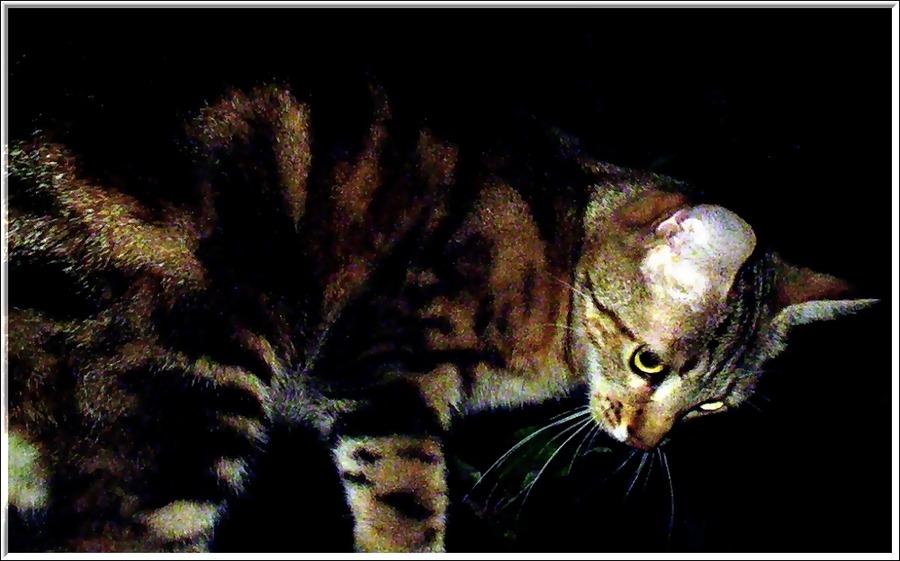 Wildes Tigerle auf der Pirsch in einer Sommer-Nacht