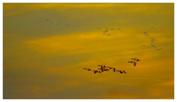 WildeVögel
