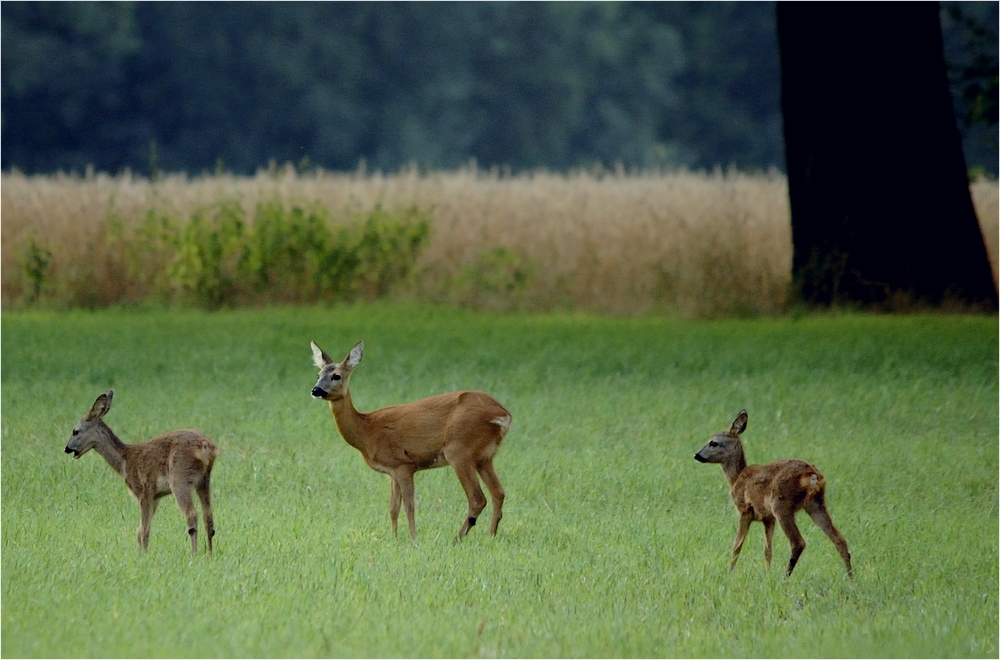 Wildfamilie