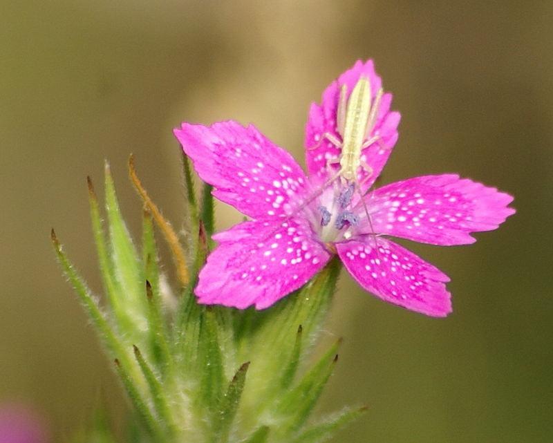 Wildflower and friend