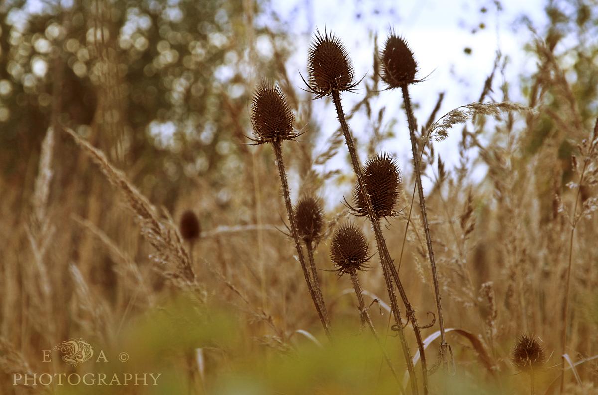 Wildflower....
