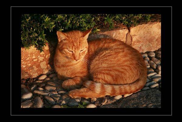 Wildkatze in der Abendsonne (Nerja - Balcon de Europa)